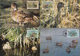 South Georgia & South Sandwich Islands Maxicards 1992 - Ducks / WWF - South Georgia