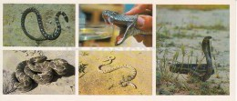 Cobra - Psammophis Lineolatus - Snakes - Kopet Dagh Nature Reserve - 1985 - Turkmenistan USSR - Unused - Turkménistan