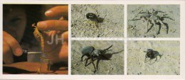 Arachnids - Tarantula - Sun Spider - Spider - Scorpion - Kopet Dagh Nature Reserve - 1985 - Turkmenistan USSR - Unused - Turkménistan