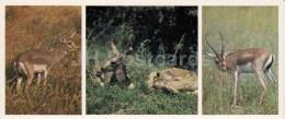 Gazelle - Kopet Dagh Nature Reserve - 1985 - Turkmenistan USSR - Unused - Turkménistan
