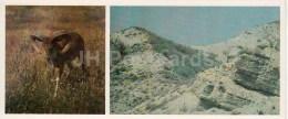 Argali - Kopet Dagh Nature Reserve - 1985 - Turkmenistan USSR - Unused - Turkménistan