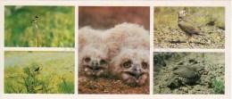 Bearded Vulture - The Caspian Ular - Alectoris - Birds - Kopet Dagh Nature Reserve - 1985 - Turkmenistan USSR - Unused - Turkménistan