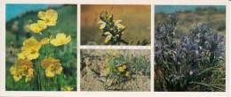 Field Flowers - Kopet Dagh Nature Reserve - 1985 - Turkmenistan USSR - Unused - Turkménistan