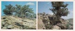 Juniper - Kopet Dagh Nature Reserve - 1985 - Turkmenistan USSR - Unused - Turkménistan