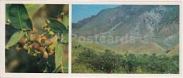 Pistacia - Kopet Dagh Nature Reserve - 1985 - Turkmenistan USSR - Unused - Turkménistan