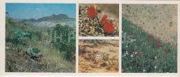 Flowers - Mushroom - Spring - Kopet Dagh Nature Reserve - 1985 - Turkmenistan USSR - Unused - Turkménistan