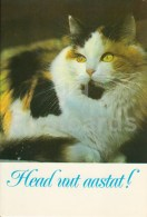 New Year Greeting Card - Cat - 1986 - Estonia USSR - Used - Año Nuevo