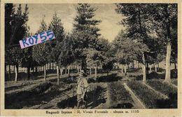 Campania-avellino-bagnoli Irpino R.vivaio Forestale Veduta Cacciatore Bosco Anni 30 - Italia
