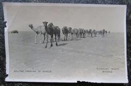Iraq Caravan Of Camels Eldorado Photo Bagdad - Iraq