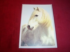 THEME   °°  LE CHEVAL  ETALON DE CAMARGUE - Pferde