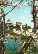 VIGNOLA FIORITURA  (136) - Italia