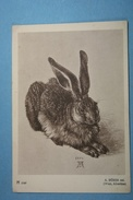 A.Durer Lapin - Illustrateurs & Photographes