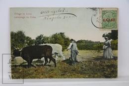 Old Postcard - Greece - Tillage In Crete, Labourage En Crete. Posted 1910 - Grecia