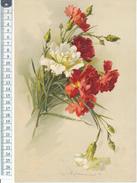 Catharina KLEIN - Chromo Format 19 X 28 Cm Sur Papier -  Fleurs, Oillets - Beaux Arts, Peinture - Vieux Papiers