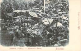 Australie - Brisbane - Botanical Gardens - Brisbane