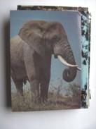 Kenia Kenya Elephant - Kenia