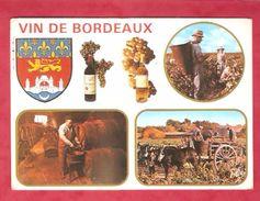 Vin De Bordeaux-Les Vendanges En Bordelais-Le Chai Et Le Maître De Chai - Vignes