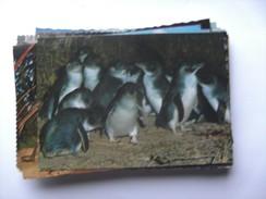 Australië Australia Fairy Penguins Pinguins - Australië