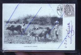 LABOUREURS INDIEN 1903                         TRAITS ANTIS COPIE - Non Classés