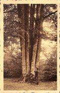 Chiny - Les Neuf Hêtres (arbre Remarquable, Animée, Rubens) - Chiny