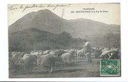 63/ PUY De DOME...MONTRODEIX Et Le Puy De Dôme... MOUTONS BERGER - Frankrijk
