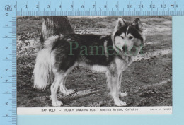 RPPC Marten River Ontario Canada - Bay Wolf, Husky Trading Post,  Photo Reel By Forder - Post Card Carte Postale - Non Classés