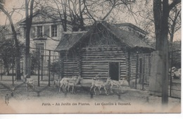 Paris - Au Jardin Des Plantes - Les Gazelles à Bezoard ( Zoo ) - District 05