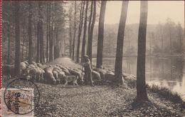 Oudergem Auderghem Deutsches Reich 1917 Rouge Cloître Forêt De Soignes Drève Berger Et Son Troupeau Mouton BRUSSEL - Auderghem - Oudergem