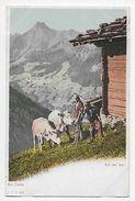 Auf Der Alp -  Undivided Back - C.P.N. 63 - Unclassified