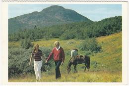 Setesdalen - View Towards The Mountain Hovdenuten Near Hovden - Horses/Pferde - (Norge/Norway) - Noorwegen