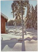 Vinter I Norge - (Winter Wonder Land) - (Norge/Norway) - Noorwegen