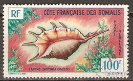 COTE DES SOMALIS   -  Aéro  -   1962.   Y&T N° 32 Oblitéré.  Coquillage  /  Shell - Usati