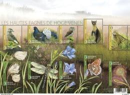 België Belgium 2017 Natuurreservaat De Hoge Venen / High Fens Nature Reserve - Buzin Birds Animals Flowers Insects - België