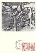 Afrique DAHOMEY (Benin)  Tisserand CARTE MAXIMUM Pub Ionyl Série A.O.F Timbre Stamp - Dahomey