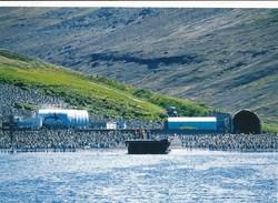 TAAF - Terres Australes Antartiques Françaises - Ile De La Possession - Crozet : Colonies De Pingouin - Station A. Faure - TAAF : Terres Australes Antarctiques Françaises