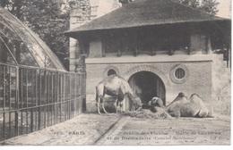 383 - Paris - Jardin Des Plantes - Mélis De Chameau Et De Dromadaire Camelus Bactrianus ( Zoo ) - District 05