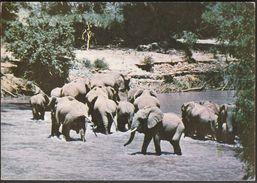 Sudan / Wild Animal Resources / Elephants - Soudan