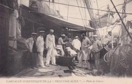 "MONACO : Campagne Scientifique De La "" PRINCESSE ALICE "" Peche De Cétacés - Oceanographic Museum"