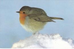 PAJARO/BIRD/OISEAU. NAVIDAD/CHRISTMAS/NOEL. CARD - CIRCA 1970s-BLEUP - Birds