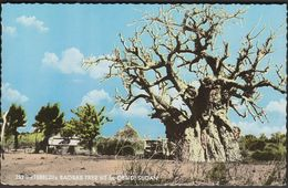 Sudan 1969 / Tebeldi Baobab Tree At El-Obeid - Sudán