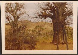 Sudan 1979 / TABALOI Tree / Southeast Sudan - Afrika