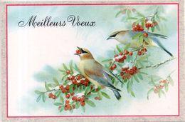 Meilleurs Vœux - Oiseaux - Nouvel An