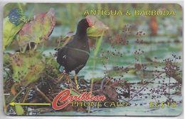 ANTIGUA & BARBUDA - COMMON MOORHEN BIRD - 104CATA - Antigua And Barbuda