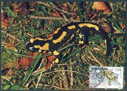 ANDORRE (2017). Carte Maximum Card - Salamandra Comuna, Salamander, Salamandre Tachetée, Feuersalamander - Cartoline Maximum