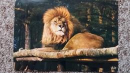CPSM LION RESERVE AFRICAINE DU CHATEAU DE THOIRY EN YVELINES 78 - Lions