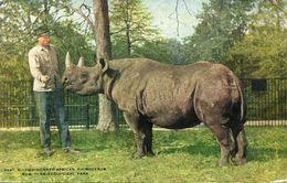 NEW YORK(RHINOCEROS) - Rhinocéros