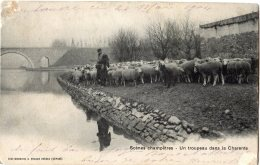 CPA (Réf. P856) Scènes Champêtres - Un Troupeau Dans La Charente (SIMI-BROMURE A. BREGER FRÈRES) - Francia
