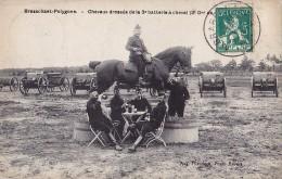 BRASSCHAAT - POLYGONE : Chevaux Dressés De La 3e Batterie à Cheval - Belgique