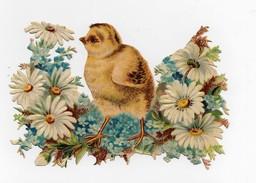 CHROMO Découpis Oiseau Poussin Fleurs Myosotis Marguerites - Animaux