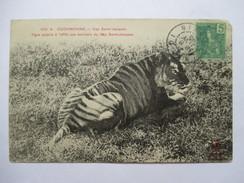 VIET-NAM  -  COCHINCHINE  -   CAP St. JACQUES  - TIGRE A L'AFFUT        TRES ANIME    Pt. MANQUE HAUT D. - Vietnam